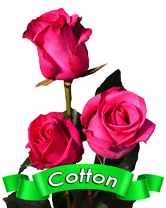 Roses Cotton