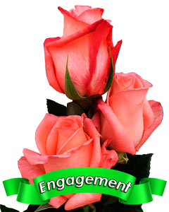 Roses Engagement
