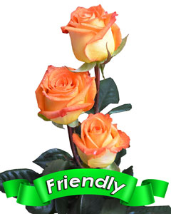 Roses Friendly