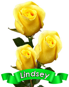 Roses Lindsey