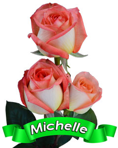Roses Michelle