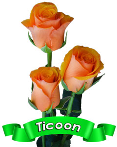 Roses ticoon